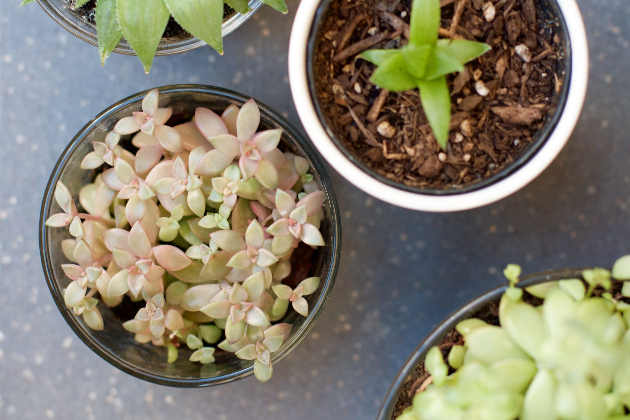 #Lifestyle | Easy Living with Springtime Succulents. Photo by Jamie Balaoro