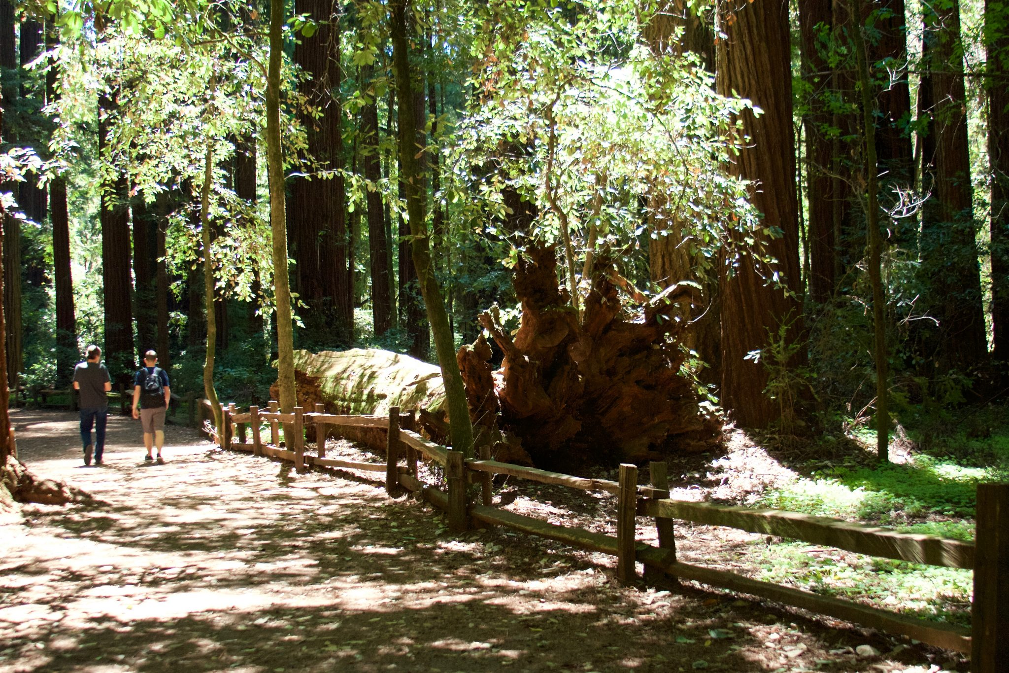 Destination | Henry Cowell Redwoods State Park. Photo by Jamie Balaoro