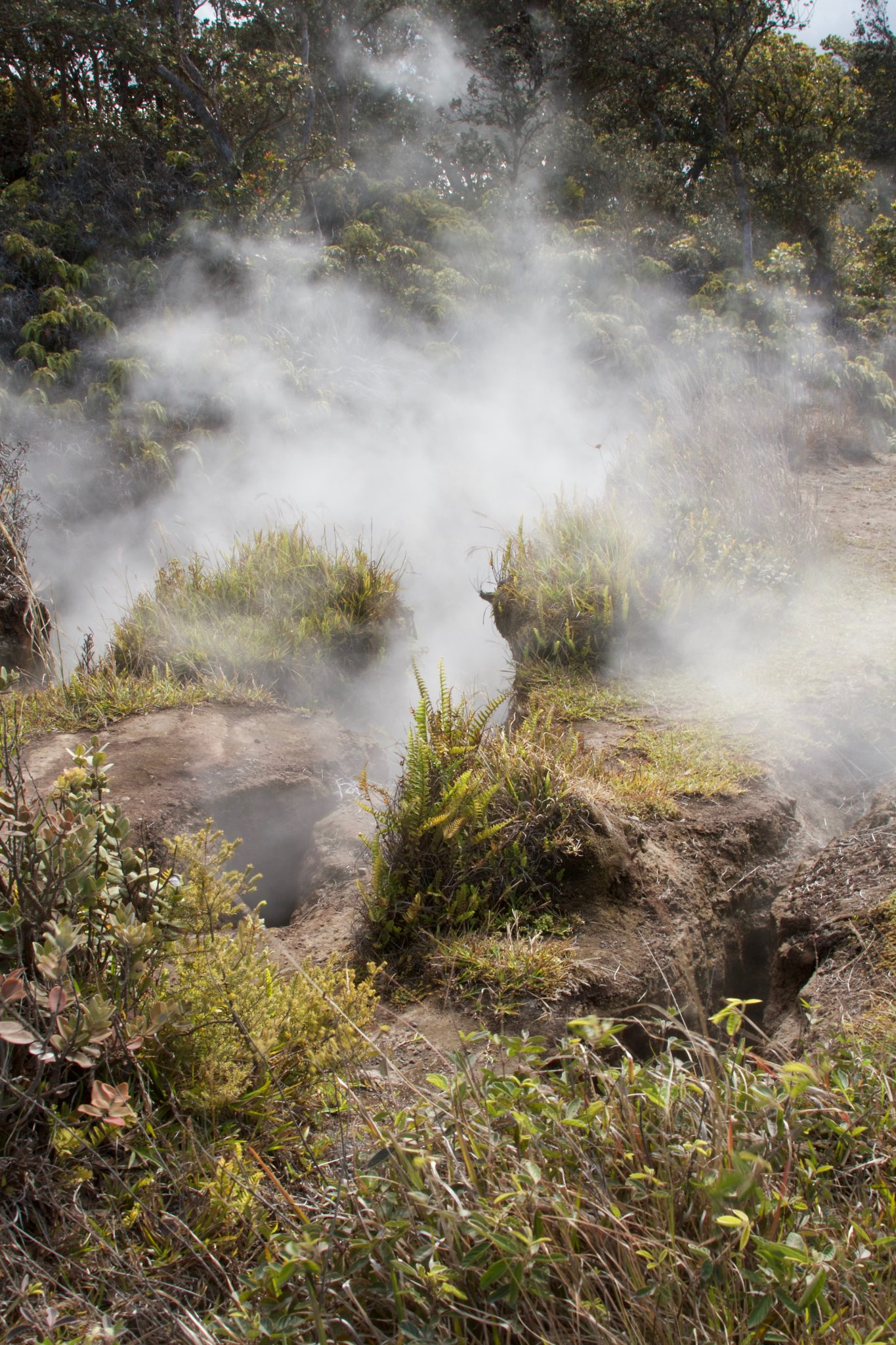 Steam vents at Hawai'i Volcanoes National Park. Photo by Jamie Balaoro | The Golden Bullet Magazine | thegoldenbullet.org